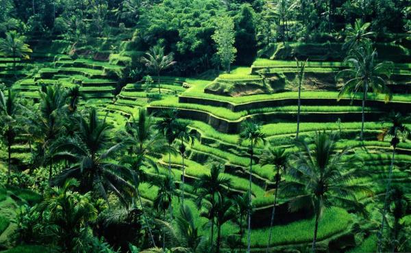 Фото. Туры в Индонезию
