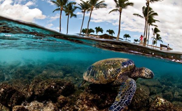 Фото. Туры в Доминикану