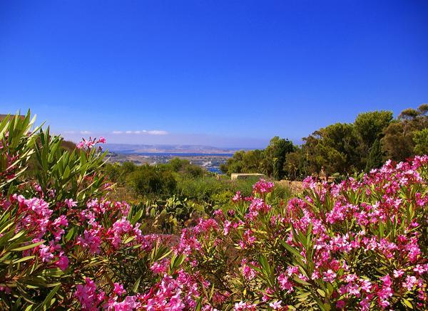 Фото. Туры на Мальту