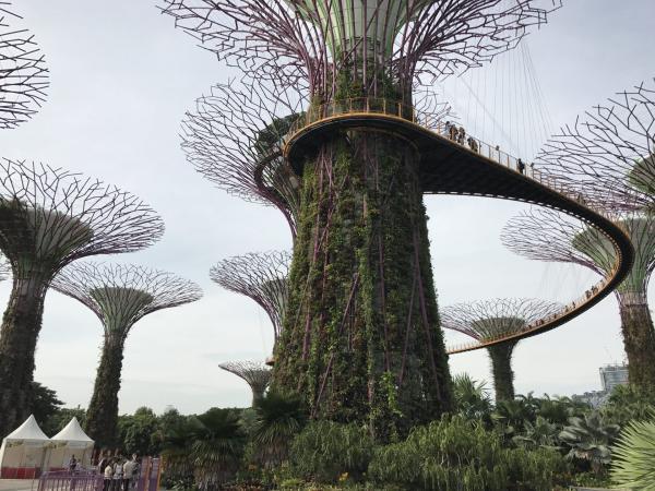 Фото. Сингапур. Достопримечательности