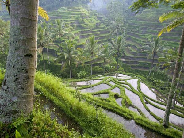 Фото. Индонезия. Бали