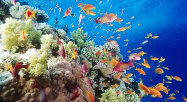 Подводный мир. Египет